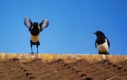 Wings to make you escape away @WKNDGetaways